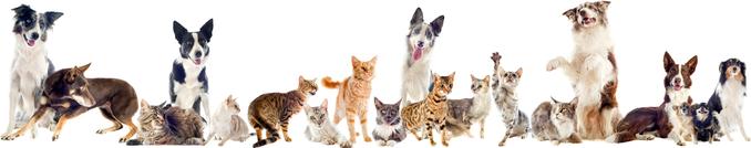 Clinique vétérinaire Valcourt ligne chiens