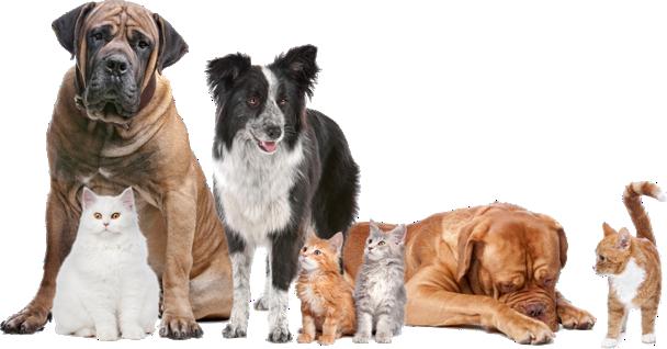 Chiens et Chats Clinique vétérinaire Valcourt