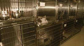 Maladies communes - Clinique vétérinaire Valcourt
